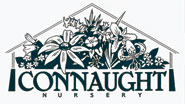 Connaught Nursery