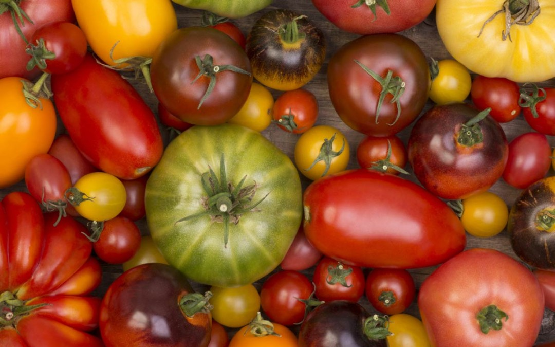 The Benefits of Tomatoes