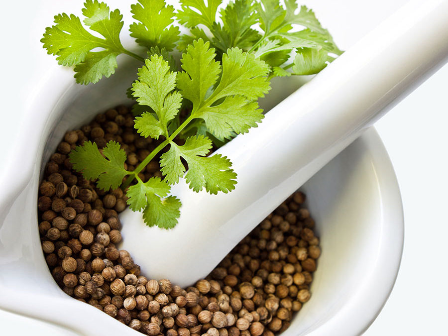 Herb of The Year 2017:  Coriander/Cilantro